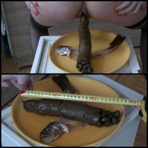 (16.02.2016) Caviar Fish Full HD 1080 – scat solo, fish, unusual